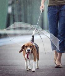 ombrello per cane