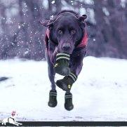 scarpe per cani.jpg